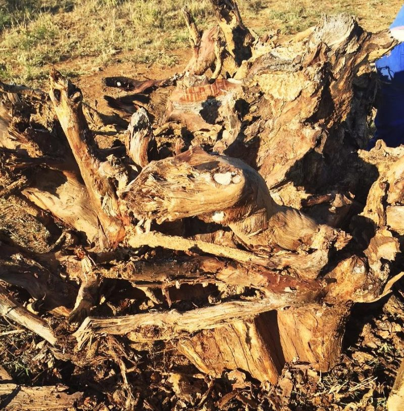 African Furniture │Raw Tree Root Dining Room Table