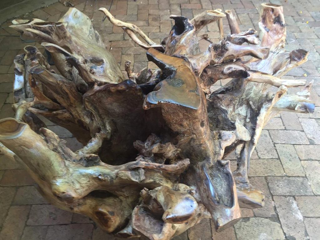 Tree Root Tables│Dining & Coffee 100